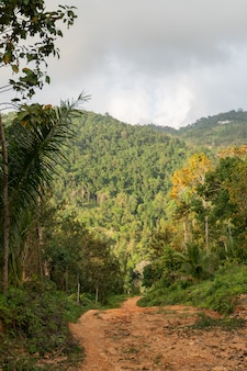 Грязная улица среди джунглей и гор