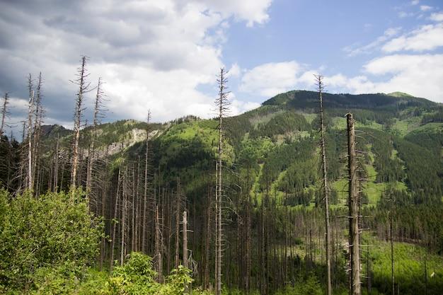 Мертвые деревья в лесу, закопане, польша, татры.