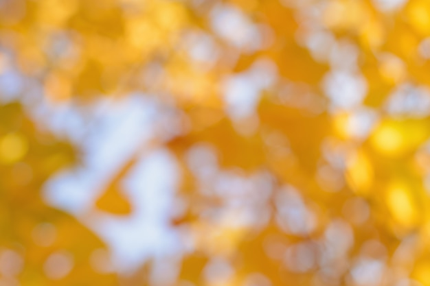 空に対してぼやけた黄色の葉