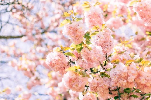 抽象的な桜。