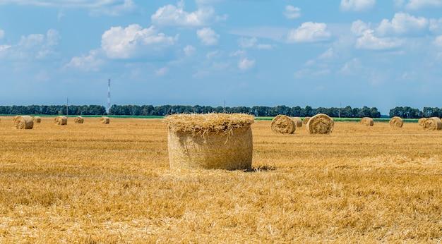 収穫後のフィールドで干し草の俵。