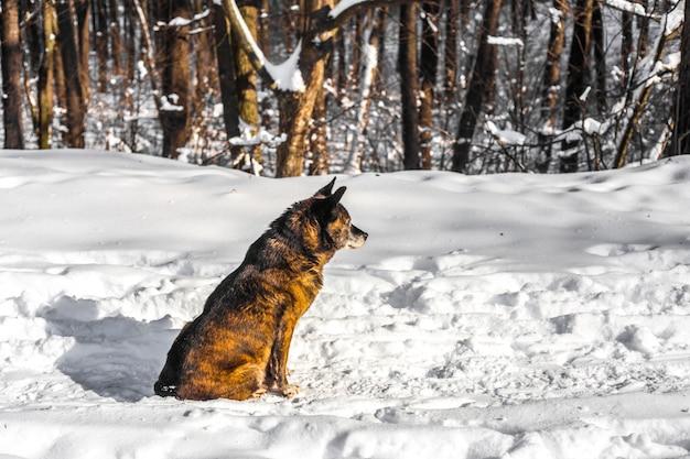 雪に覆われた森の中の犬