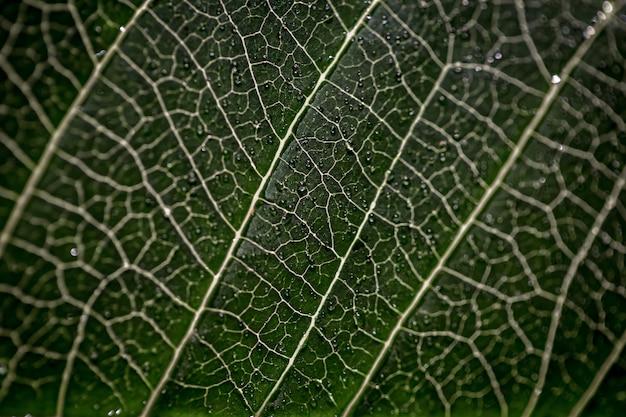 Большой зеленый лист макро текстуры листа с каплями воды крупным планом