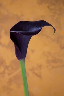壁にオランダカイウユリの花