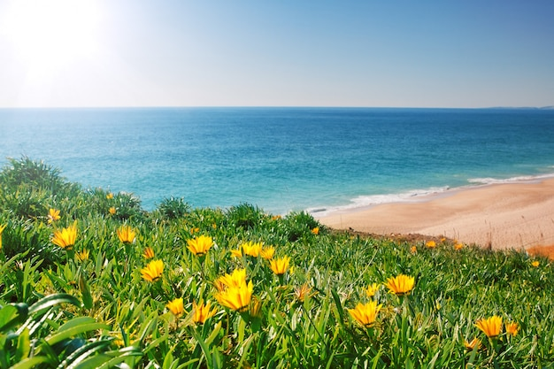 Просмотр морской пейзаж с желтыми цветами и травой. португалия, алгарве.