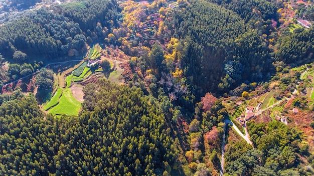 空中。モンシケの生態ゾーンの森林と景観。ドローンで空から。