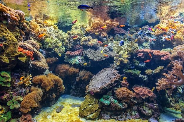Тропические рыбы в коралловом аквариуме.