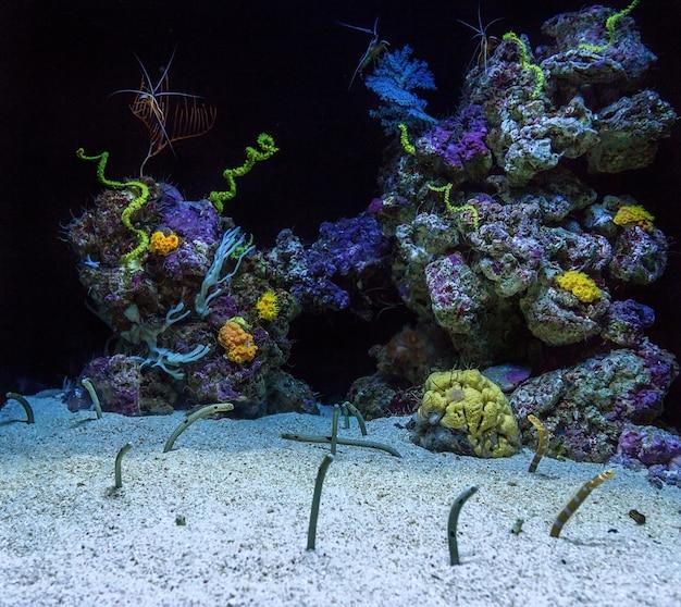 Аквариум с кораллами и угрями. рыба торчащая из песка.