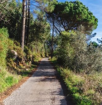 木々の間の森の中の道。前に出てください。