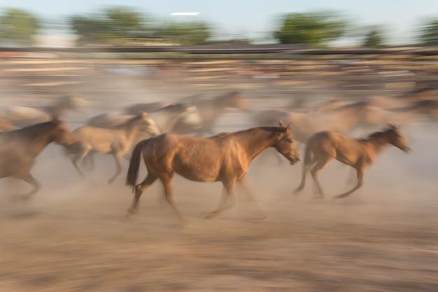 Табун лошадей в движении размыт.