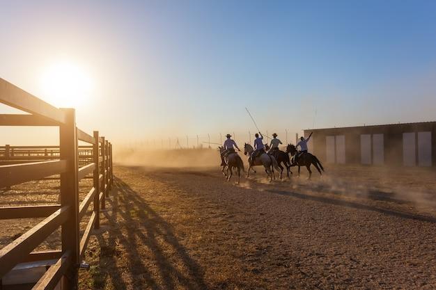 日没で牧場で走っている馬。