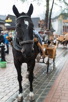Лошадь в деревне закопане, польша, польша