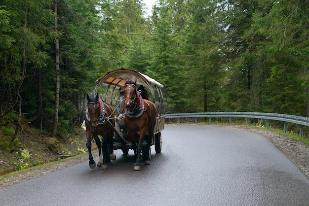 Конный перевал в польских татрах