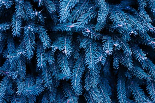Ель в классическом синем цвете. модный фон. цвет года.