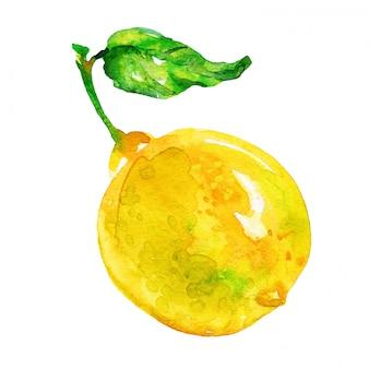 手描きレモン。分離された水彩画の新鮮な柑橘系の果物