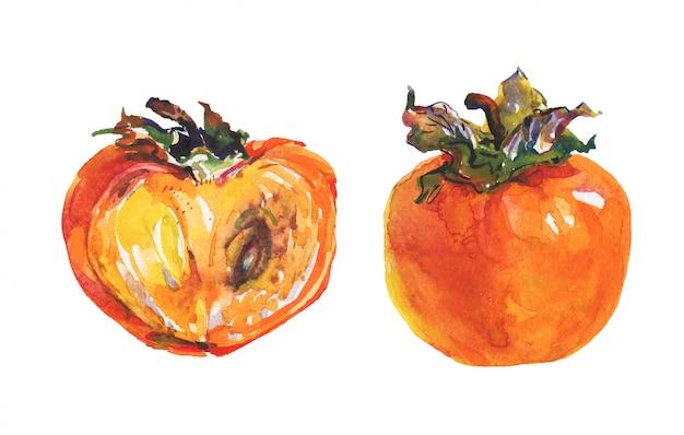 Ручной обращается спелые и целые хурмы. акварель свежие фрукты изолированные