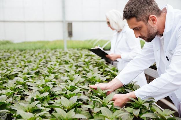 Зрелый бородатый человек работает с растениями