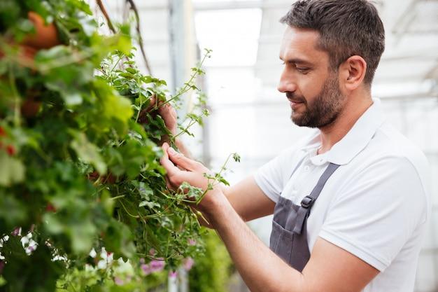Сконцентрированный бородатый человек в белой футболке работает с растениями