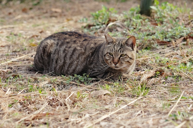 通りの猫が公園の脇道に身をかがめる