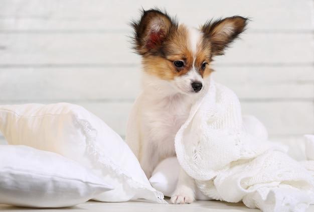 Милый щенок на белых подушках