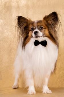 蝶ネクタイの犬