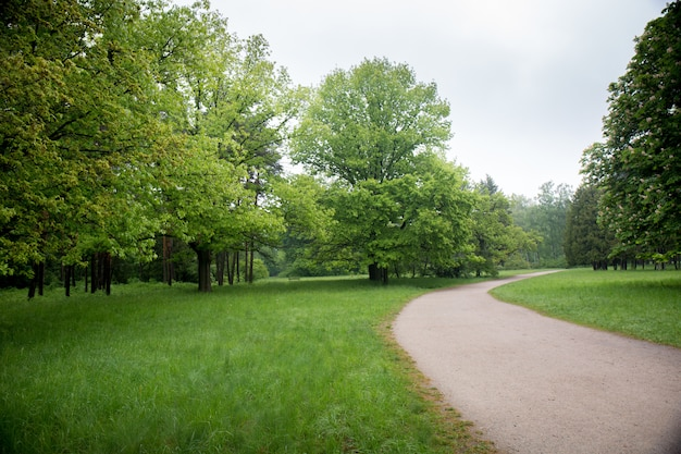 Дорога в весеннем парке