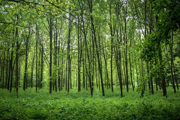 通れない若い森