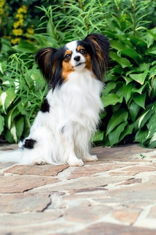 Смешная собака в саду
