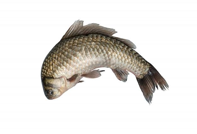 魚のダイビング