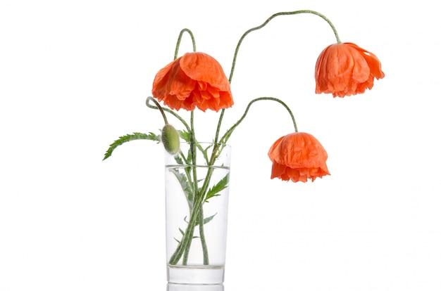 白で隔離ガラス花瓶のポピーの花束