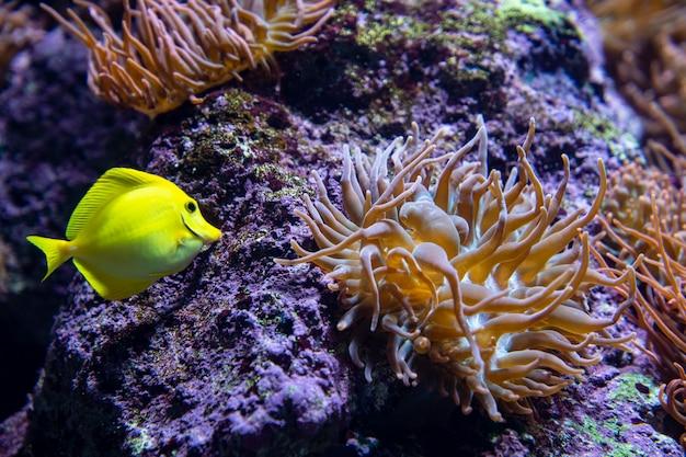 海の下のアネモネの花