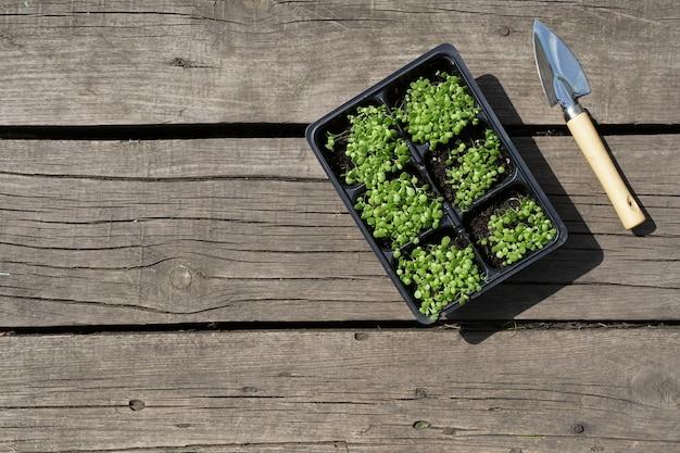 Небольшие зеленые саженцы табака в пластиковых горшках и стальной лопаткой на деревенском деревянном столе