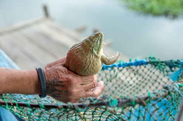 手に大きな茶色のカエル