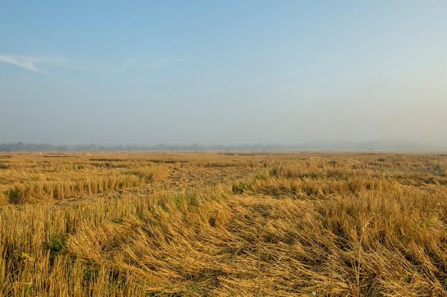 タイの朝の空と収穫後の田んぼの眺め。
