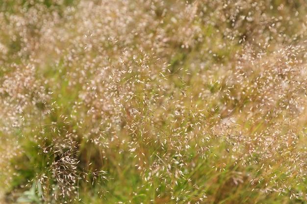 森の草の背景