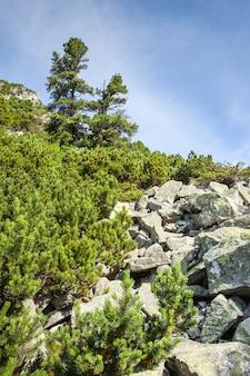 Камни и молодые сосны на склонах высоких татр