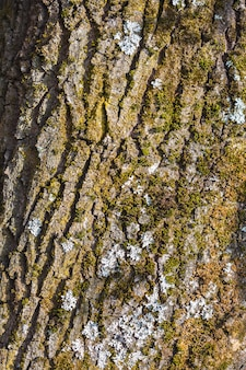 Старая кора дерева
