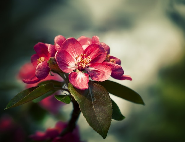 春の花と枝
