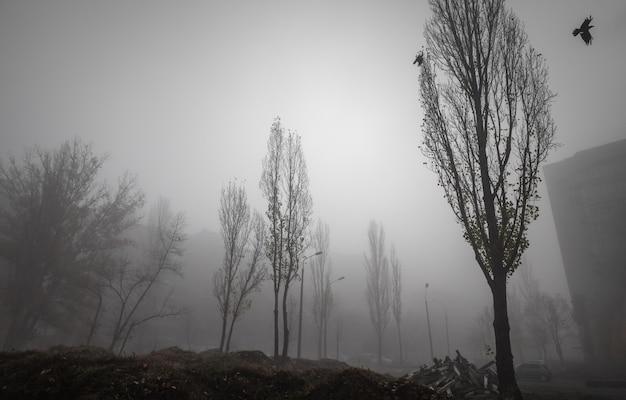 都市の霧の秋の朝