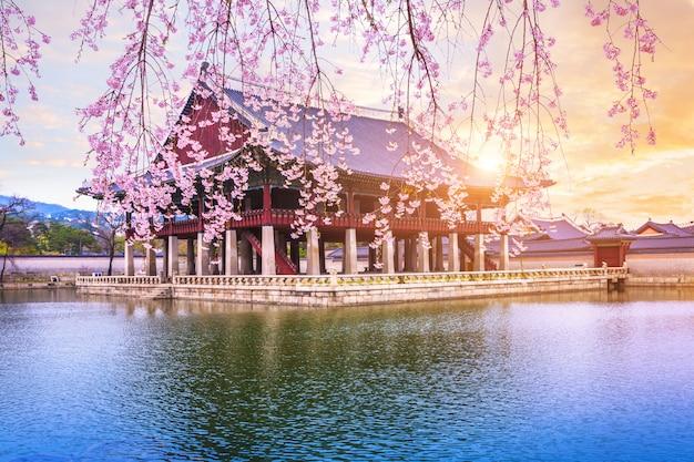 韓国ソウル市の春の時間に桜の木と景福宮。