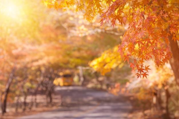 Кленовые листья осенью, абстракция для фона или копией пространства для текста