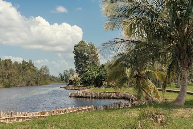 川の土手でヤシの木と熱帯林の風景