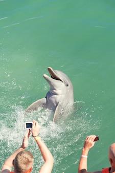 Люди плавают с дельфинами