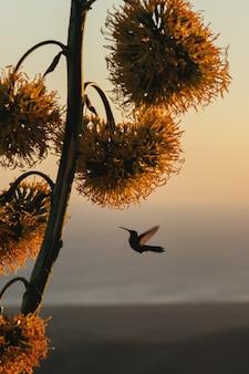 夕暮れ時の熱帯の花の近くに浮かぶハチドリ