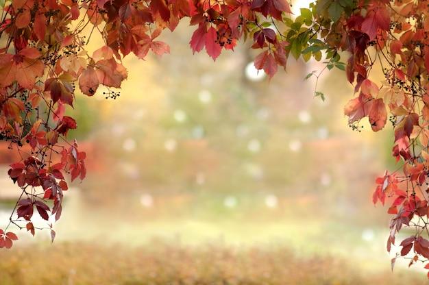 赤い葉を持つ野生ブドウのアーチ