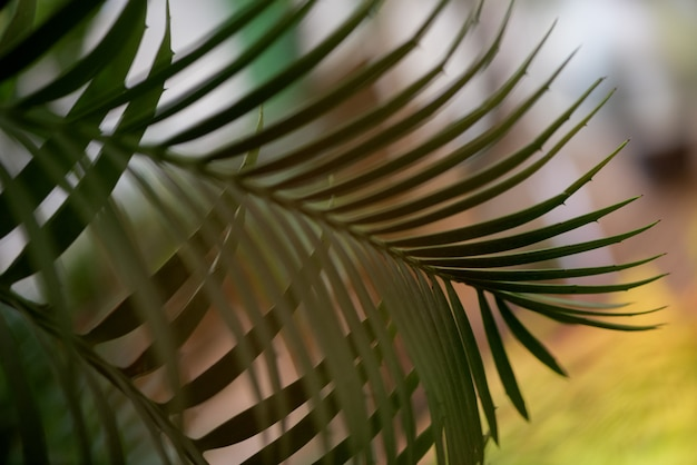 明るい背景に緑の仲間の葉