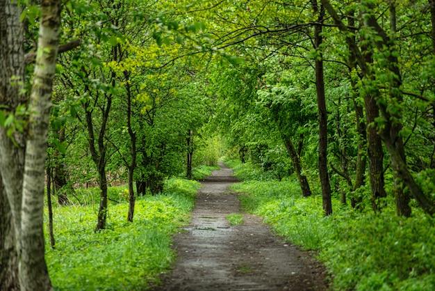 田舎の緑の木々の間の地上道路