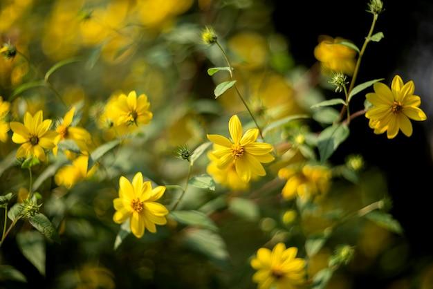 夏の庭の黄色い花