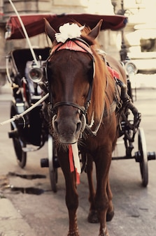 観光ルートのハーネスの茶色の馬