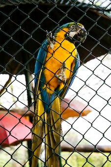 動物園で青と金色の大きなコンゴウインコオウム